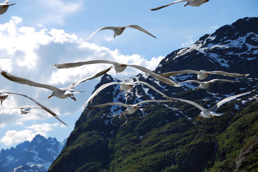 Trollfjord-0011