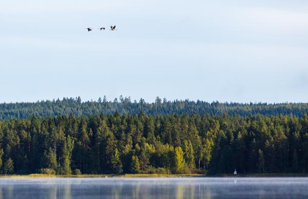 Finland-fishing-jazztour-0043
