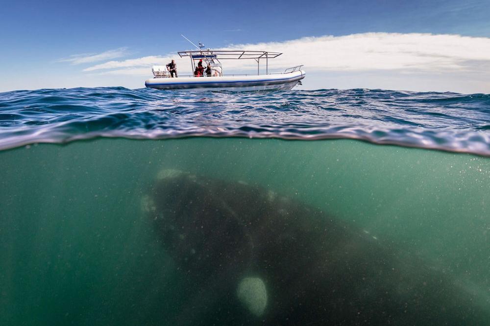 whale-Valdez-Argentina-000