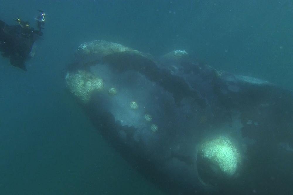 whale-Valdez-Argentina-003