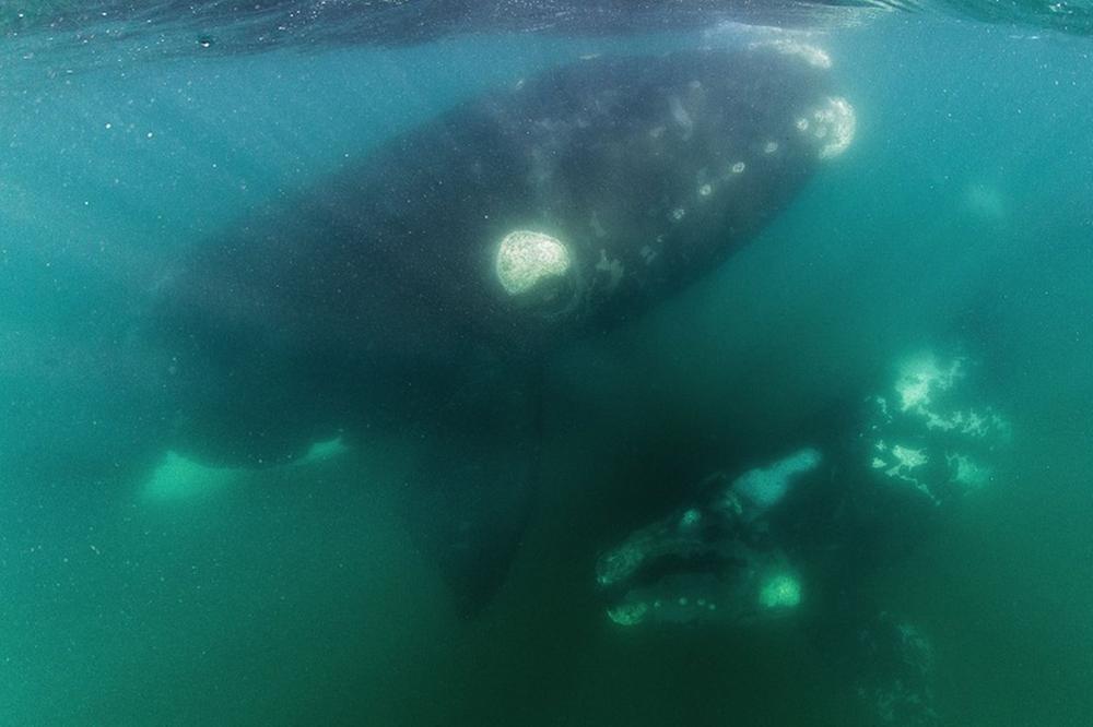 whale-Valdes-Argentina-004