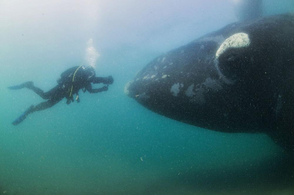 whale-Valdez-Argentina-005
