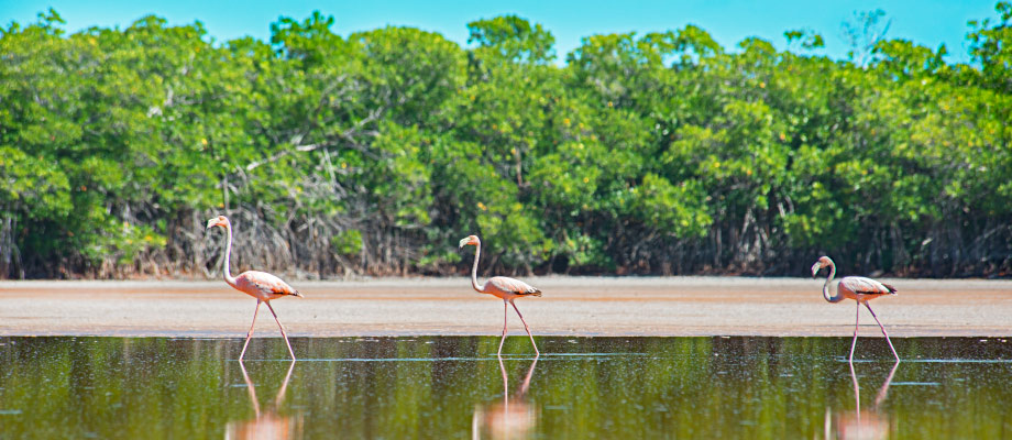 flamingos-northwest-point-providenciales