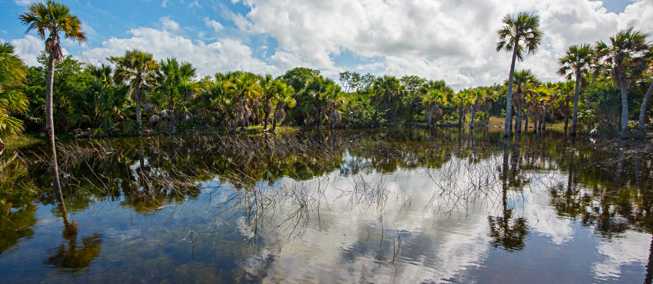 freshwater-pond-middle-caicos