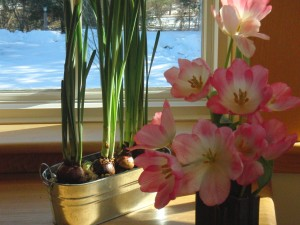 tulipspapwhites