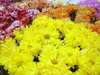 'Flower heaven'.