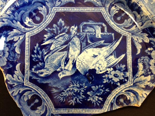 dead bird detail