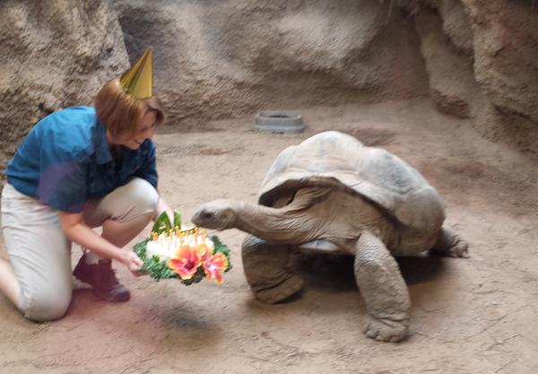 reptileland_al_turtle.jpg