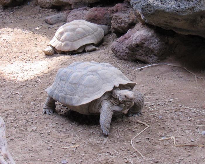 2017zoo_turtle.jpg