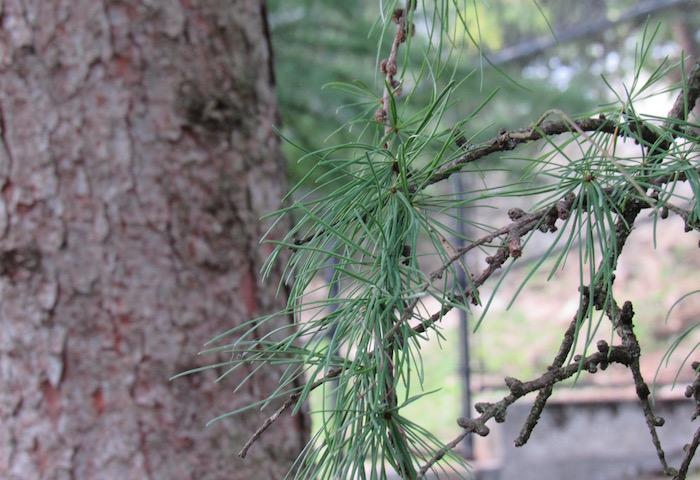 2017zoo_tree.jpg