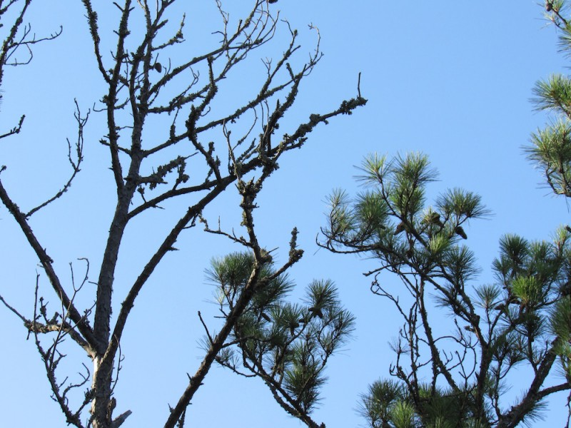 trees8 copy.jpg