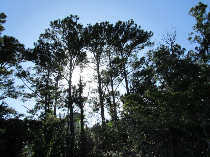 trees6 copy.jpg