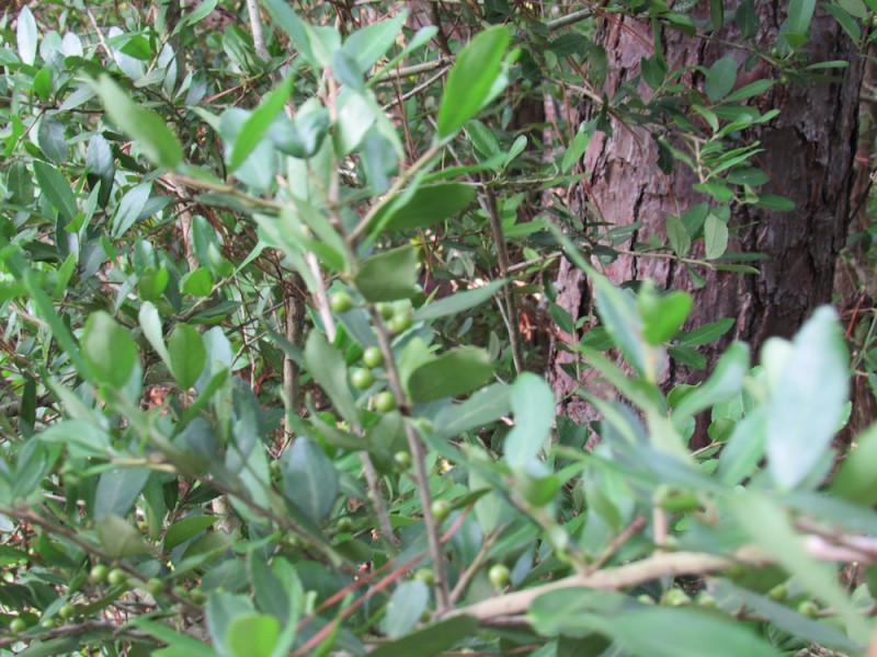 tree1 copy.jpg