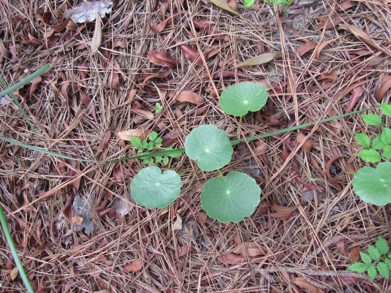 greens2 copy.jpg