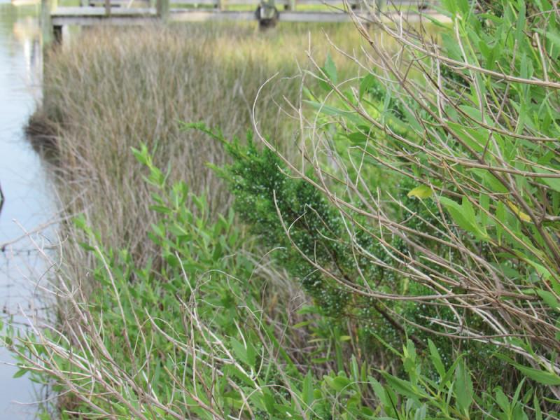 grasses copy.jpg