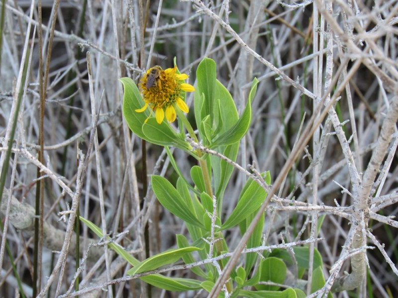flower3 copy.jpg