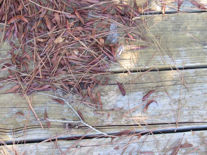 dock2 copy.jpg