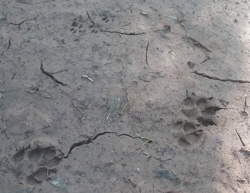 prints_2018-07-28_2-dogcat-skunk.jpg