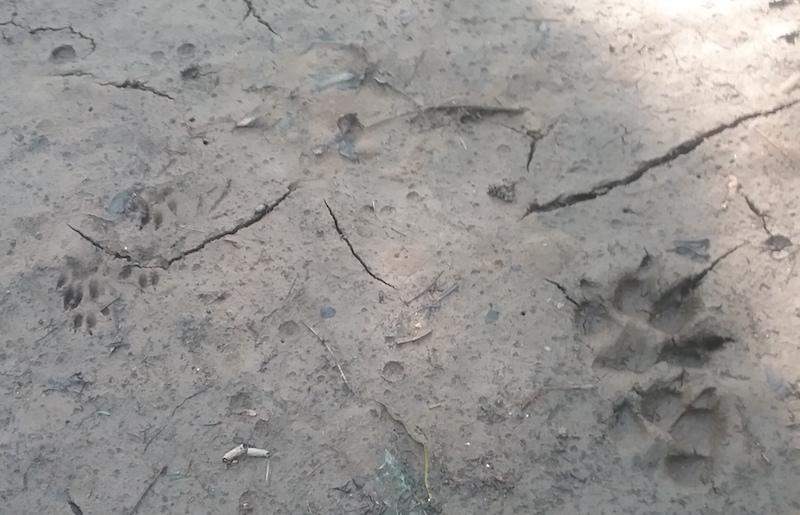 prints_2018-07-28_3dogcatskunk.jpg