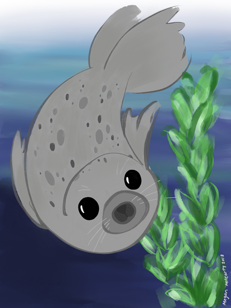 harbor-seal.PNG
