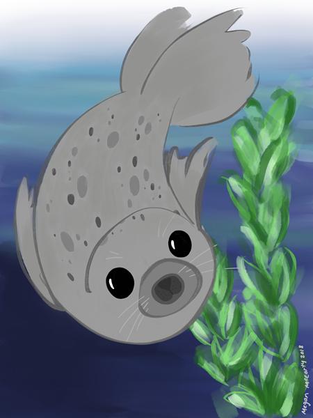 harbor-seal.PNG