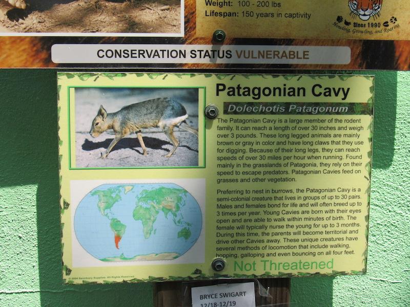 cavy1.JPG