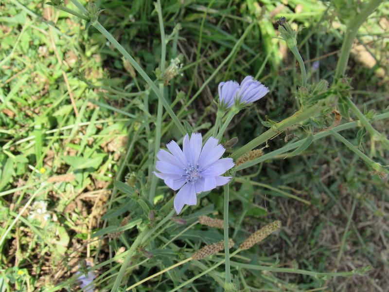 flowers27.JPG