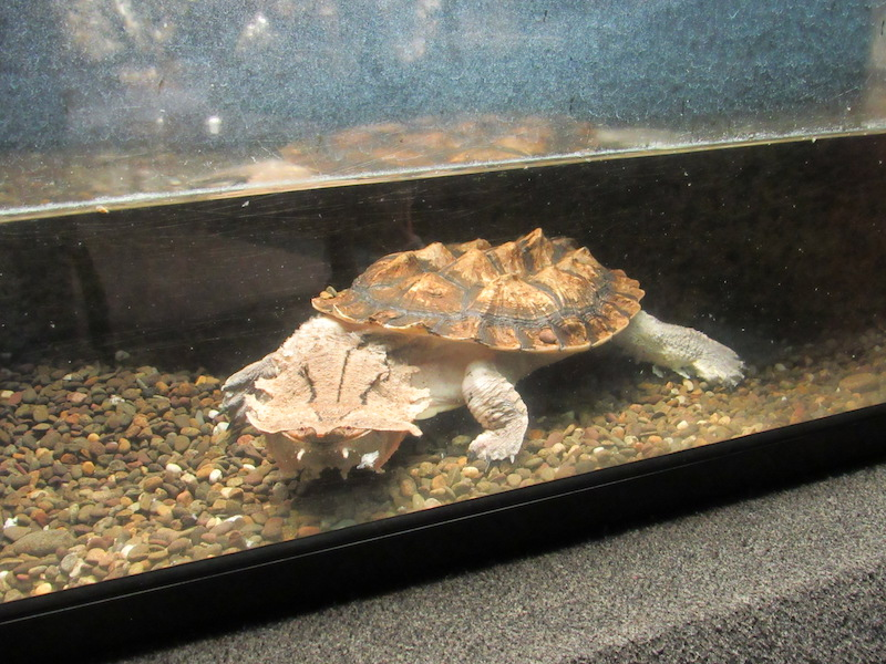 weird-turtle.JPG