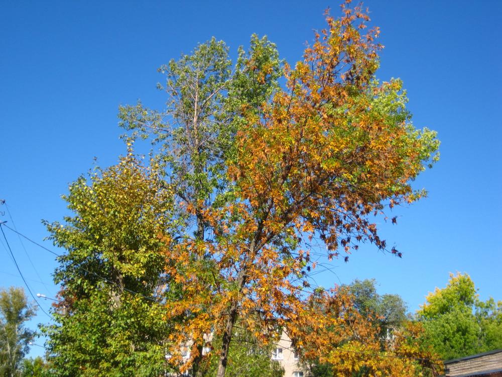 Осень 031