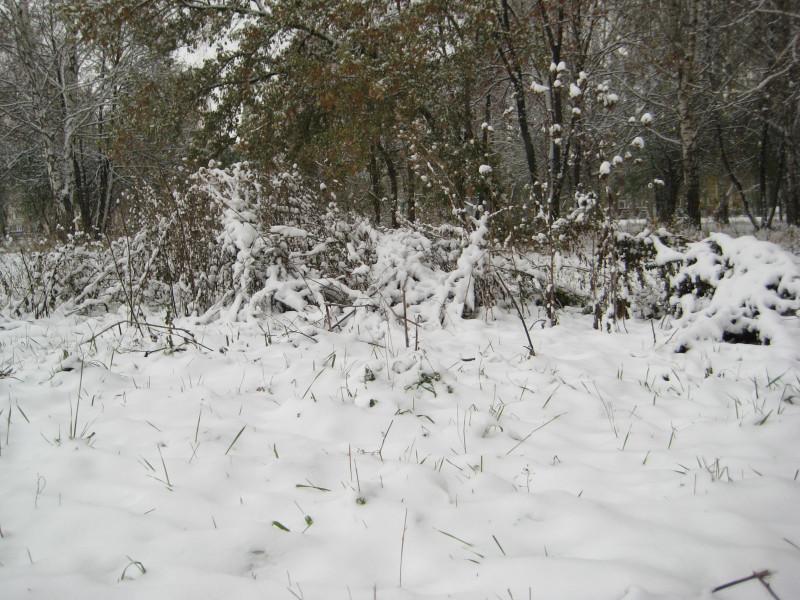 зима 012