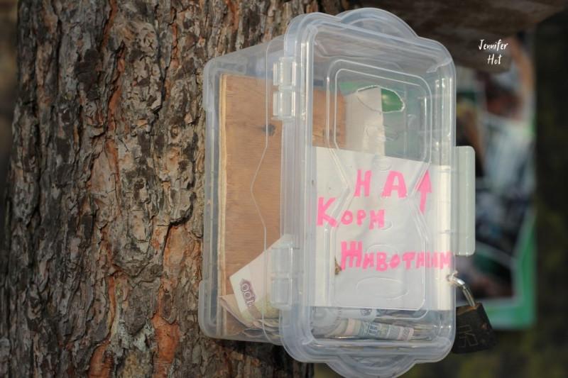 Неприметная баночка на дереве для тех, кто захочет помочь животным Маши.