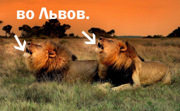 Lions Kariega