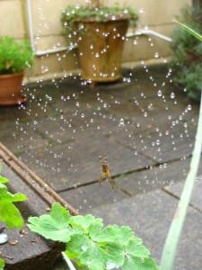 Autumn Spiders 1
