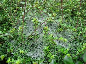 Autumn Spiders 3