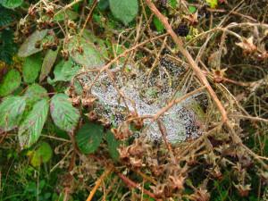Autumn Spiders 4