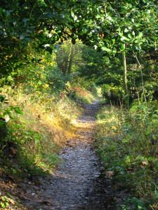 Autumn 2012 5