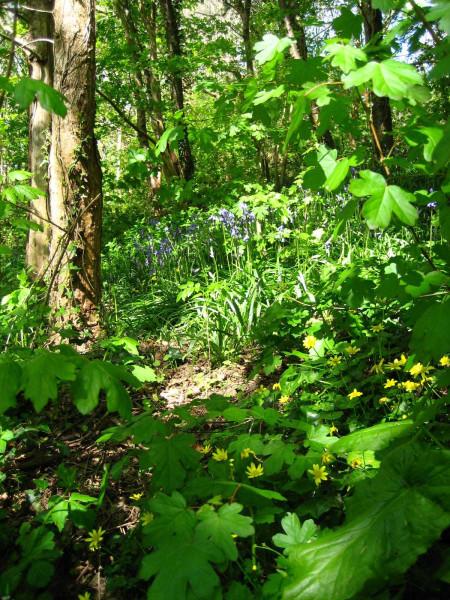 Valley May 3