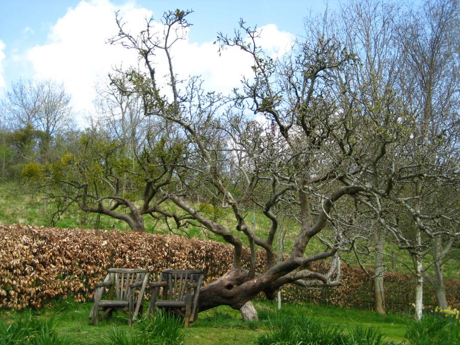 Glastonbury Spring 2012 012