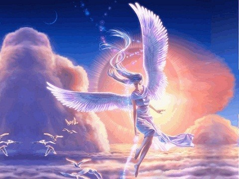 angell113