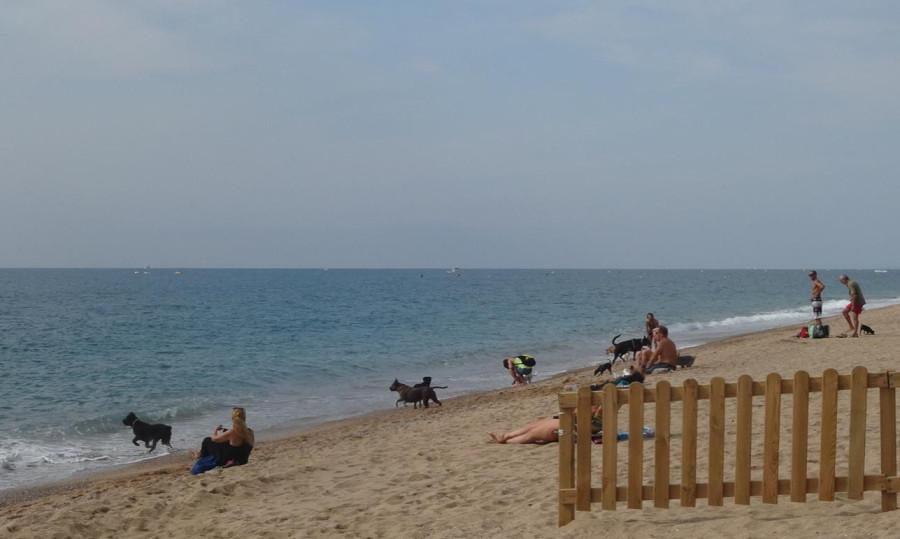 Общественный пляж для собак, Каталония