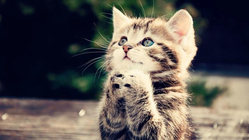 cat_molitva