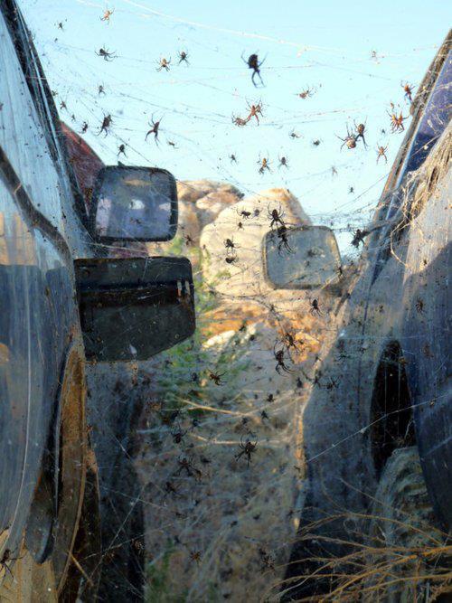 arachnophobie film complet en français