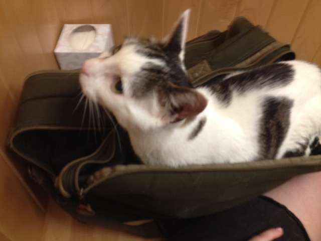 Spotted cat's cute face poking out of a briefcase-style bag