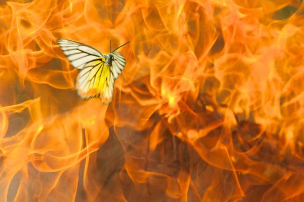 бабочка летит на огонь