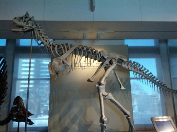 mon_11_carnotaurus