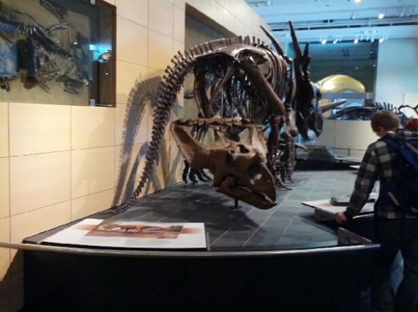mon_34_leptoceratops