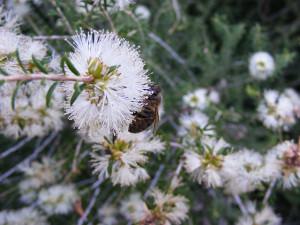 18-1-15 White Flower 3 - Resize