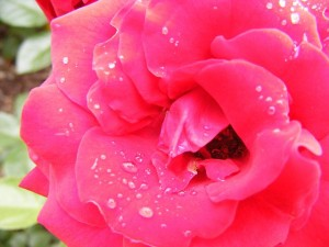 26-10-14 Flower 1 - Resize