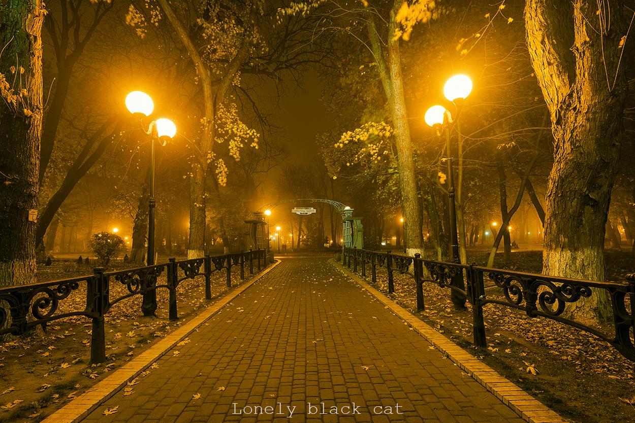 lonelyblackcat cityscape photography