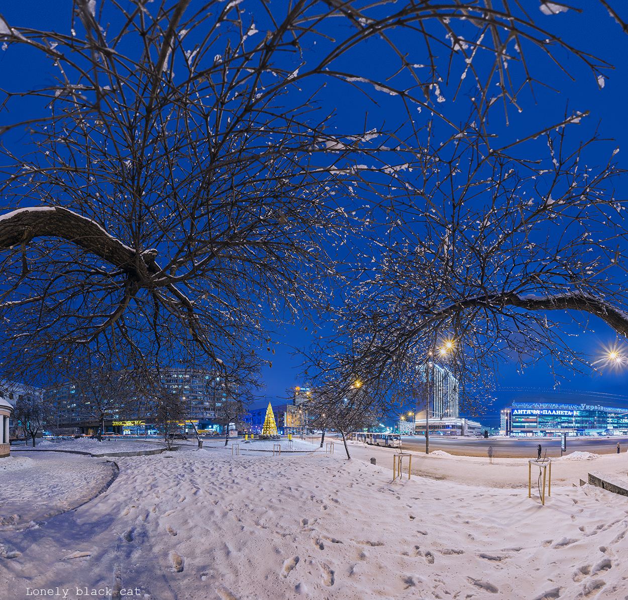 christmas tree in Kyiv photography by lonelyblackcat